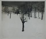 Appelboom in de sneeuw