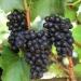 WijnTafel: proef pinot noir uit de hele wereld